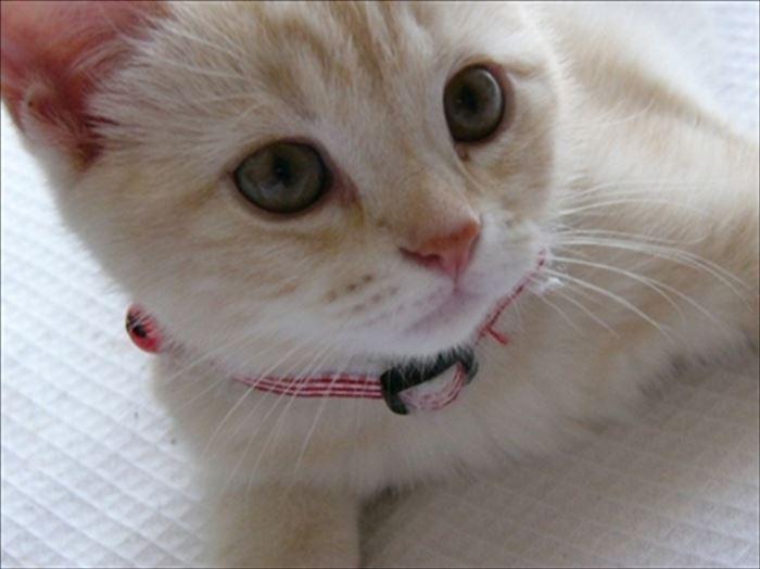 かわいい猫88