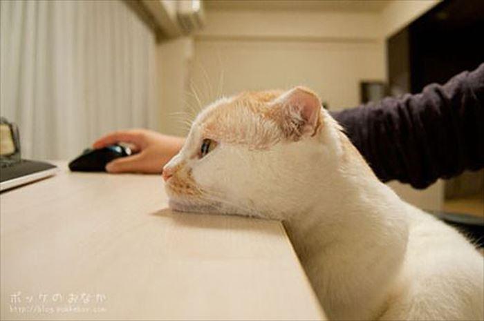 かわいい猫89