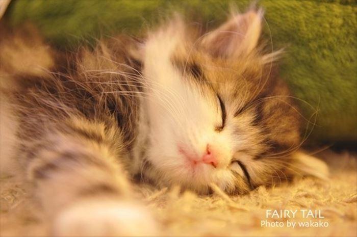 かわいい猫9