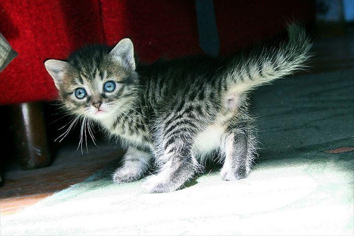 かわいい猫91