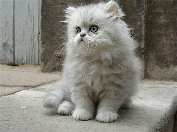 かわいい猫92