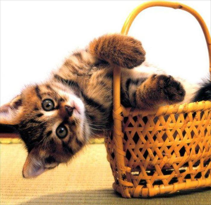 かわいい猫93