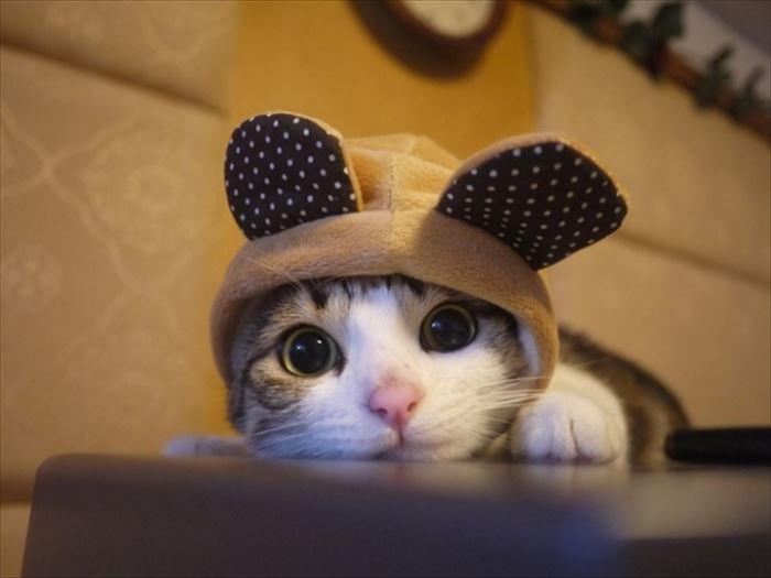 かわいい猫96
