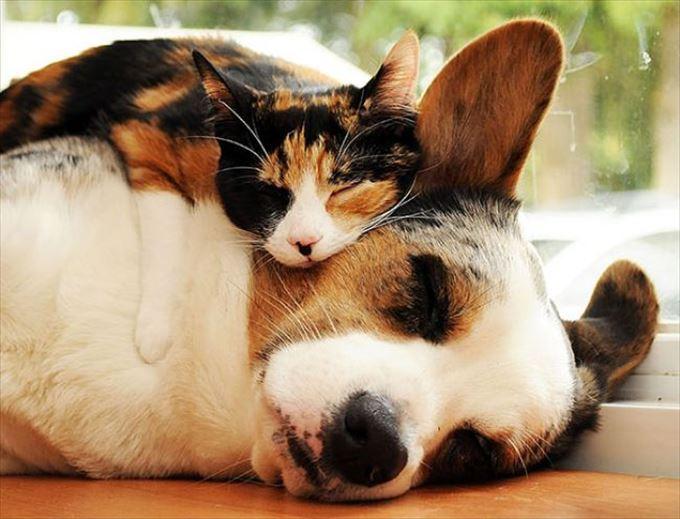 可愛い動物13