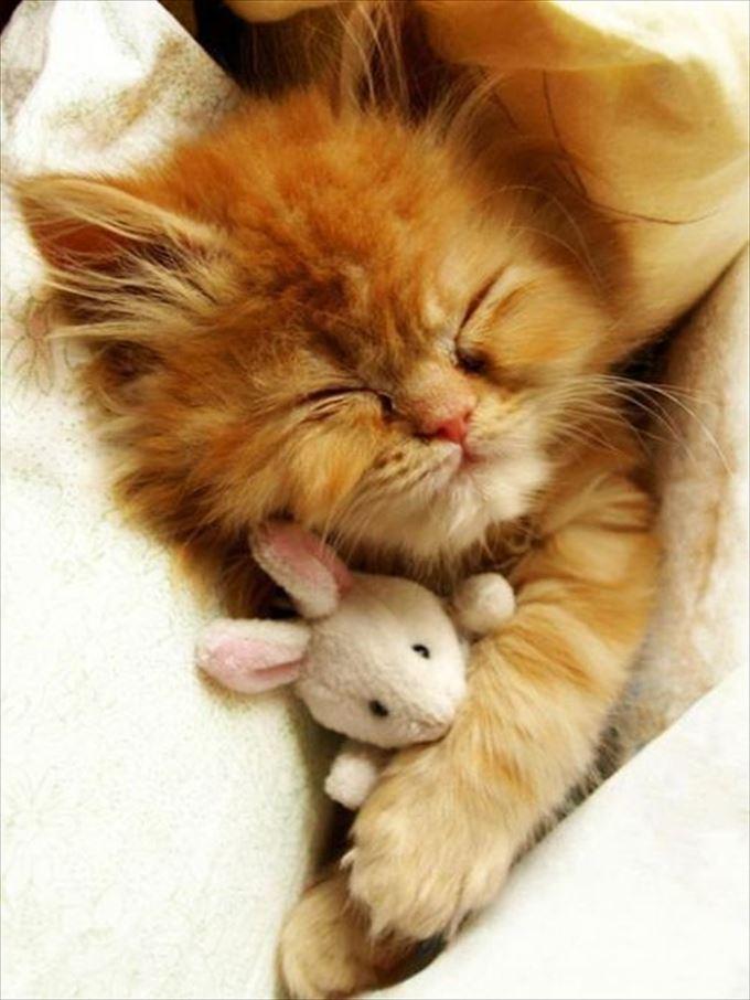 可愛い動物2