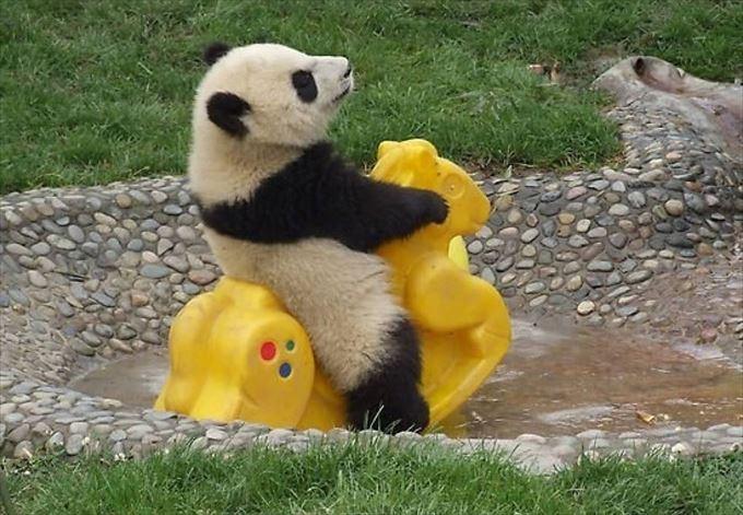 かわいいパンダ15