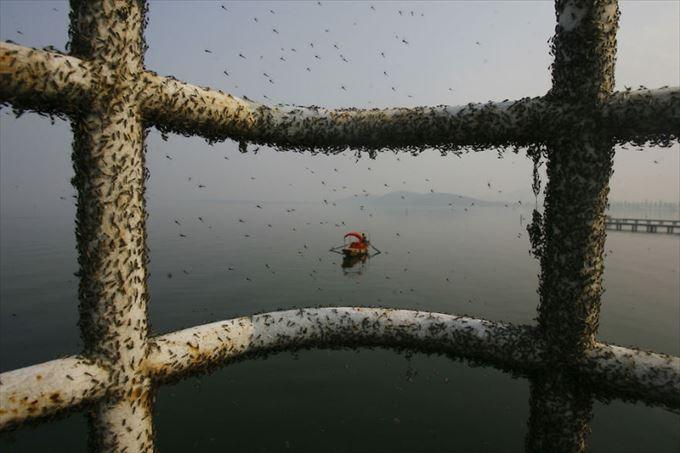 中国汚染 29