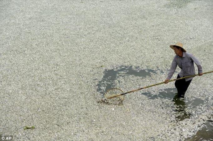 中国汚染 31