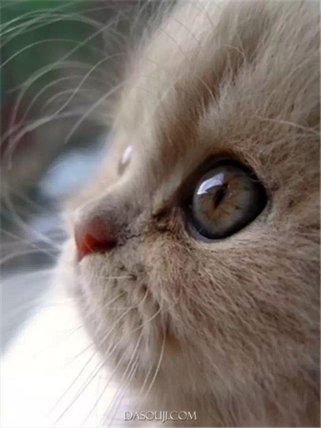 可愛い猫0