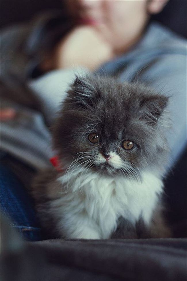 可愛い猫1