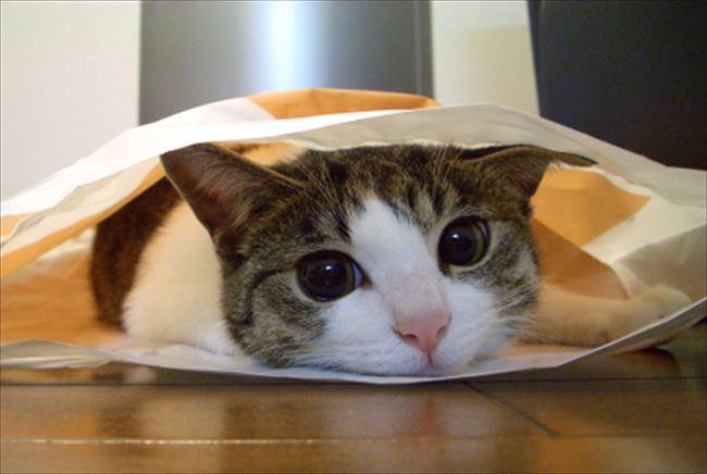 可愛い猫10