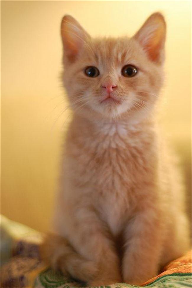可愛い猫11