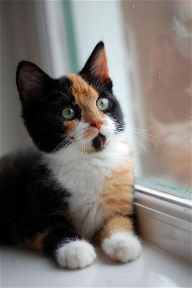 可愛い猫12