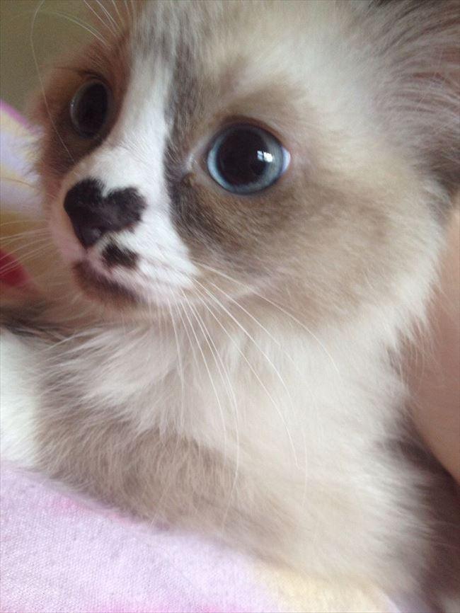 可愛い猫13
