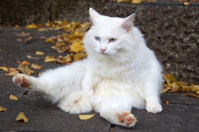可愛い猫14