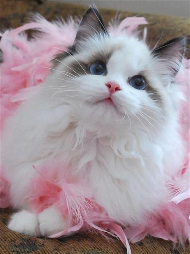 可愛い猫19