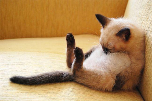 可愛い猫20