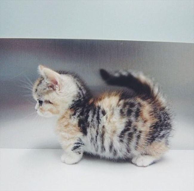 可愛い猫21