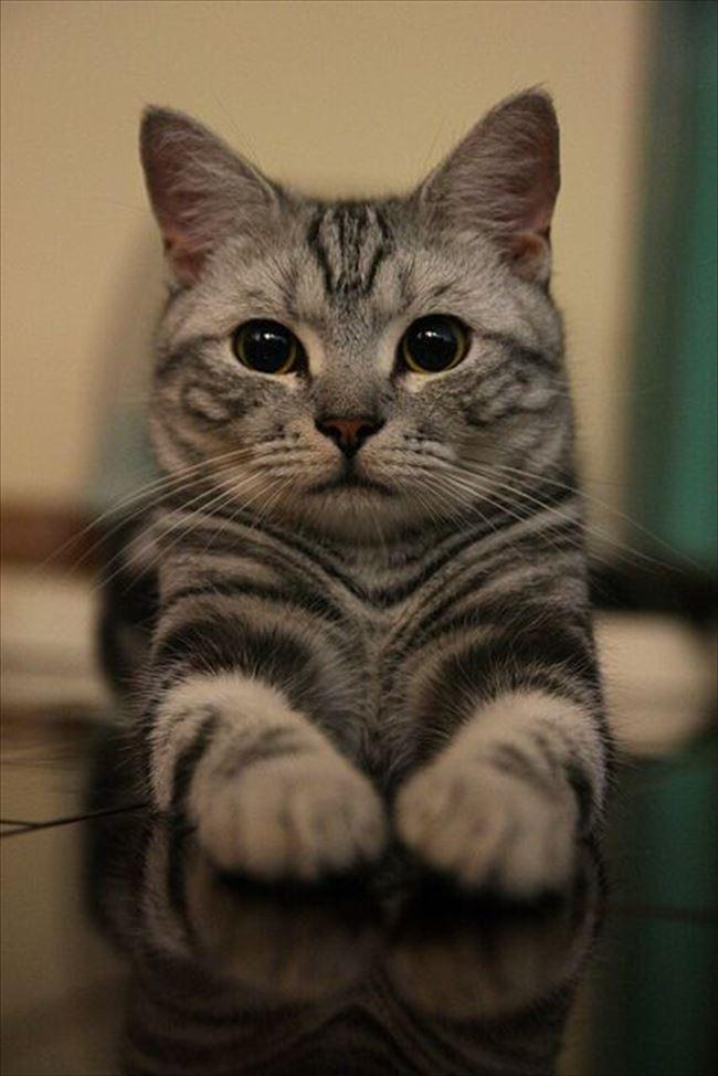 可愛い猫22