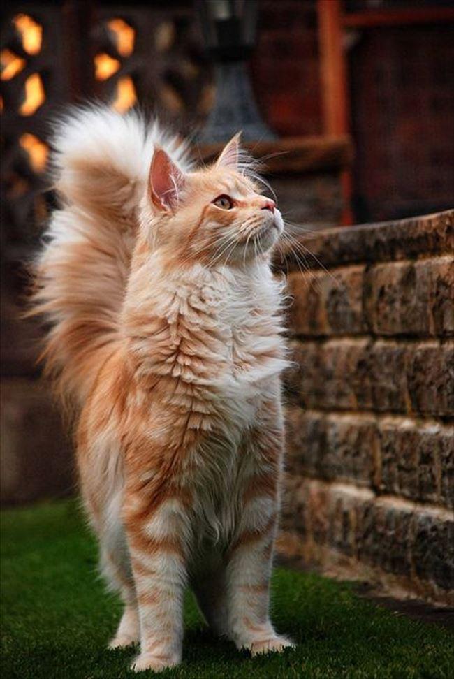 可愛い猫23