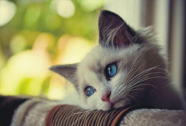 可愛い猫27