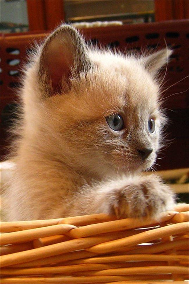 可愛い猫29