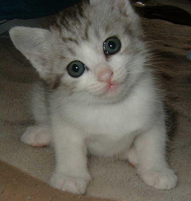 可愛い猫3