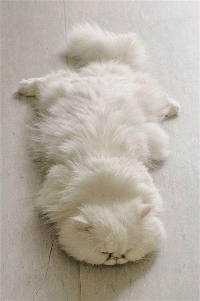可愛い猫34