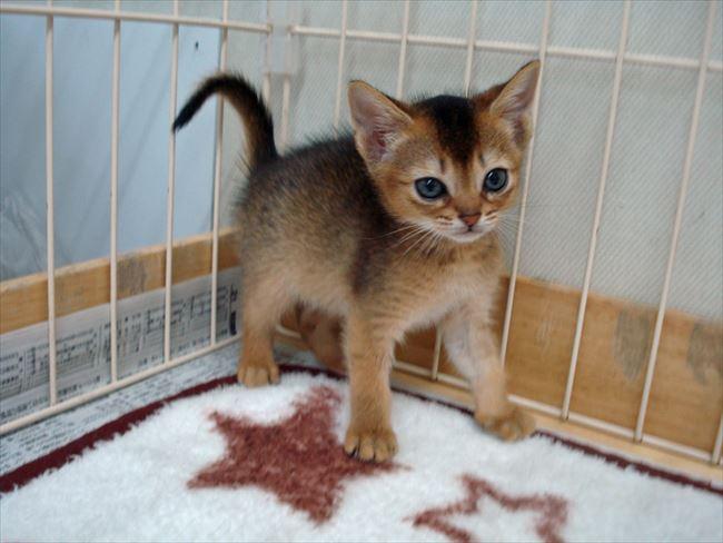 可愛い猫9