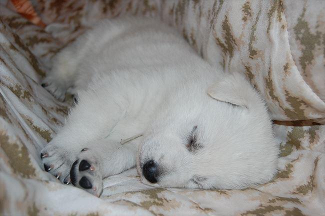 とってもいやされる可愛い犬たちの画像集【150選】
