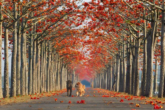 美しい道 13