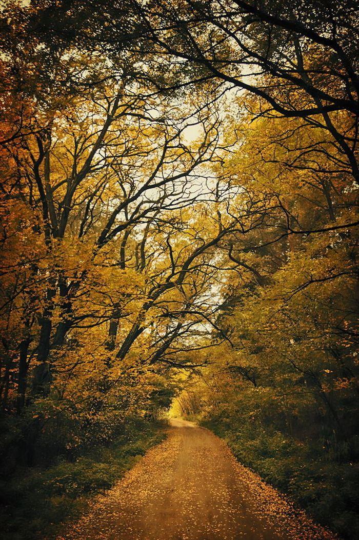 美しい道 17