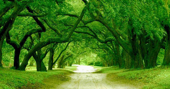 美しい道 28