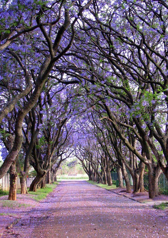 美しい道 6