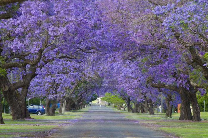 美しい道 9