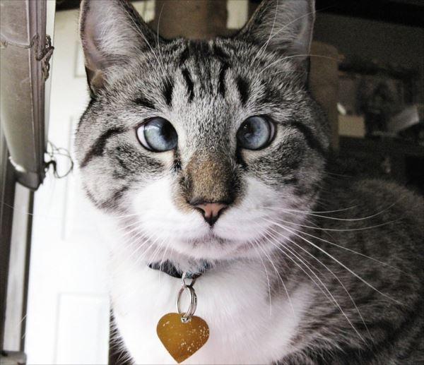 面白猫14