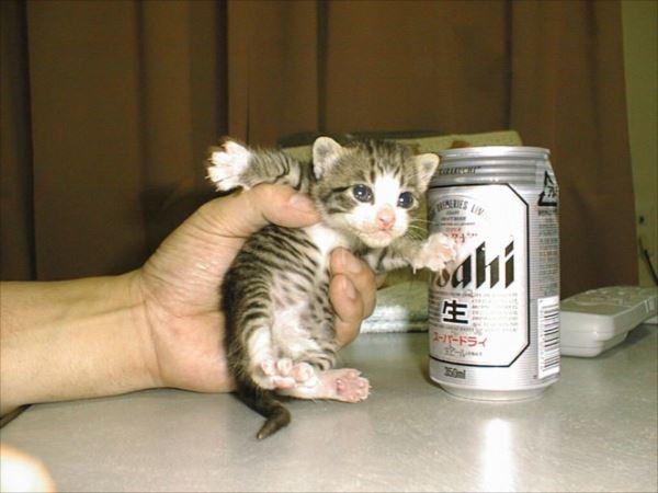 面白猫16