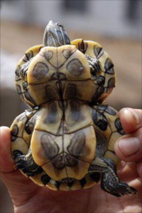 sad-Deformed-Tortoises