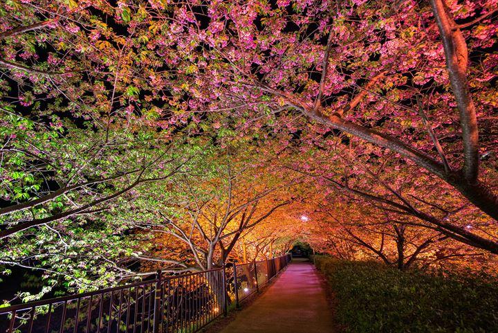 美しいトンネル 19