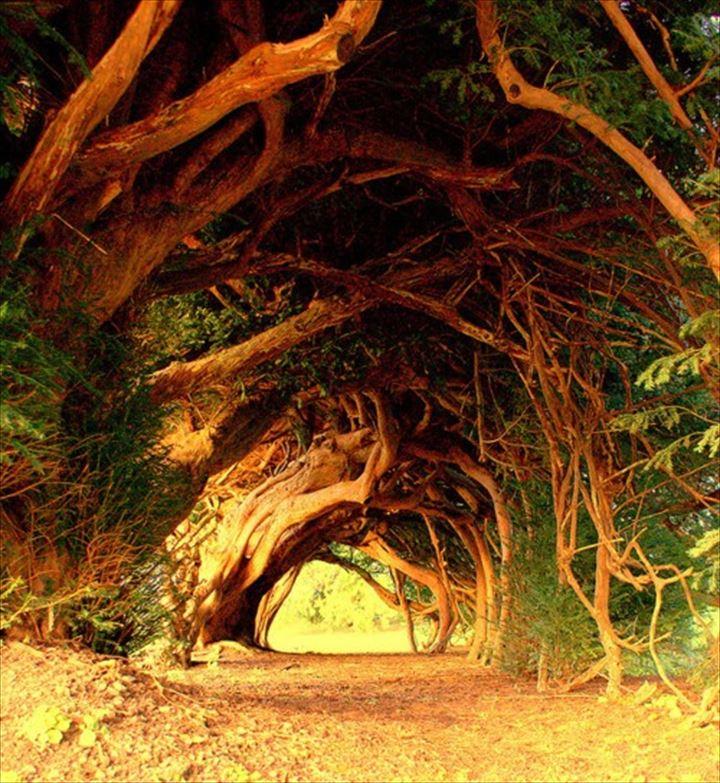 美しいトンネル 4