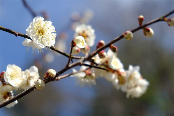美しく可愛い花と花言葉(一覧・画像)