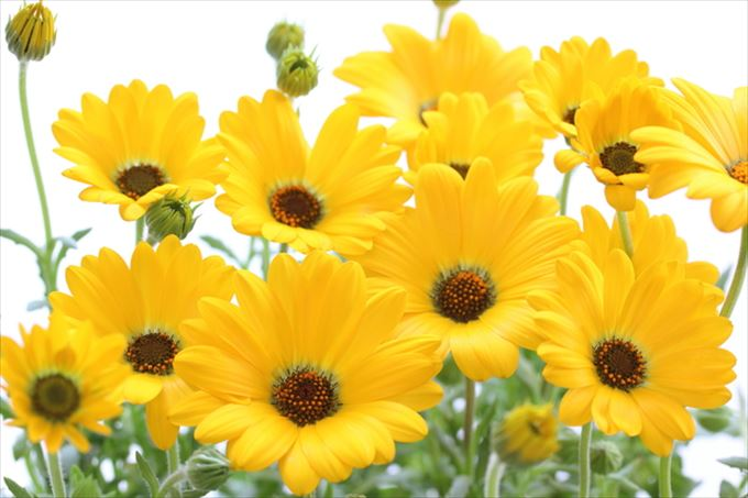 美しい花と花言葉 10