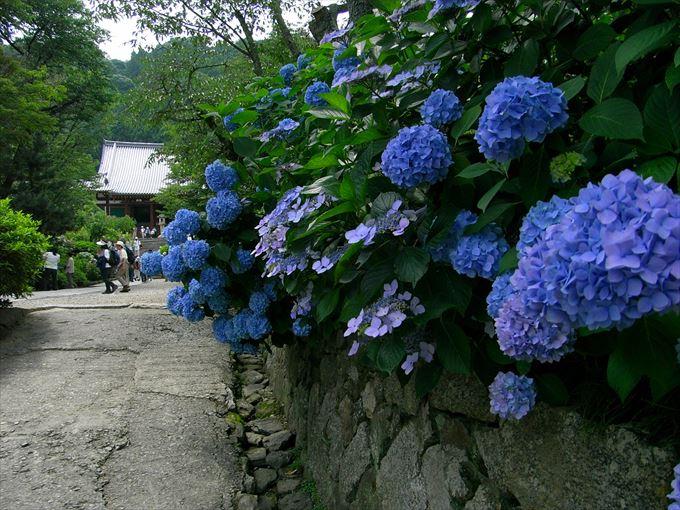 美しい花と花言葉 11
