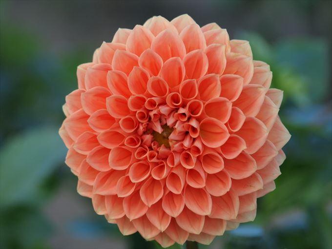 美しい花と花言葉 12.5