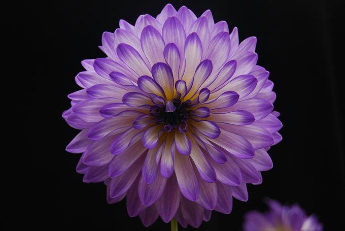 美しい花と花言葉 12