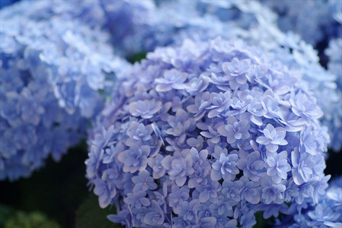 美しい花と花言葉 14