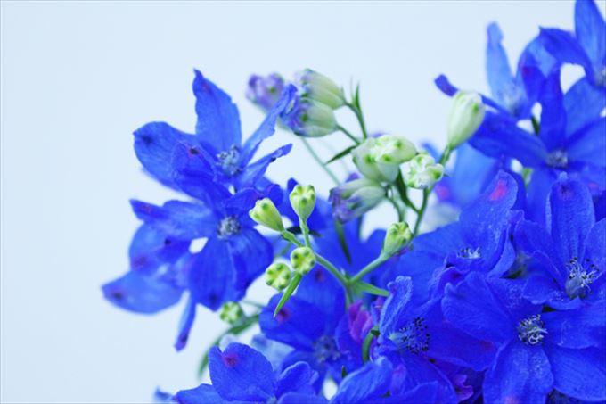 美しい花と花言葉 15