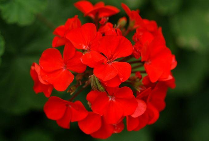 美しい花と花言葉 16