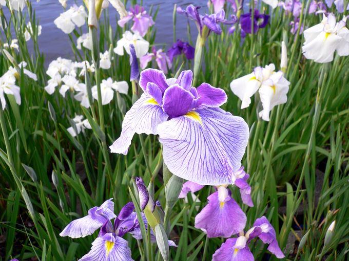 美しい花と花言葉 17