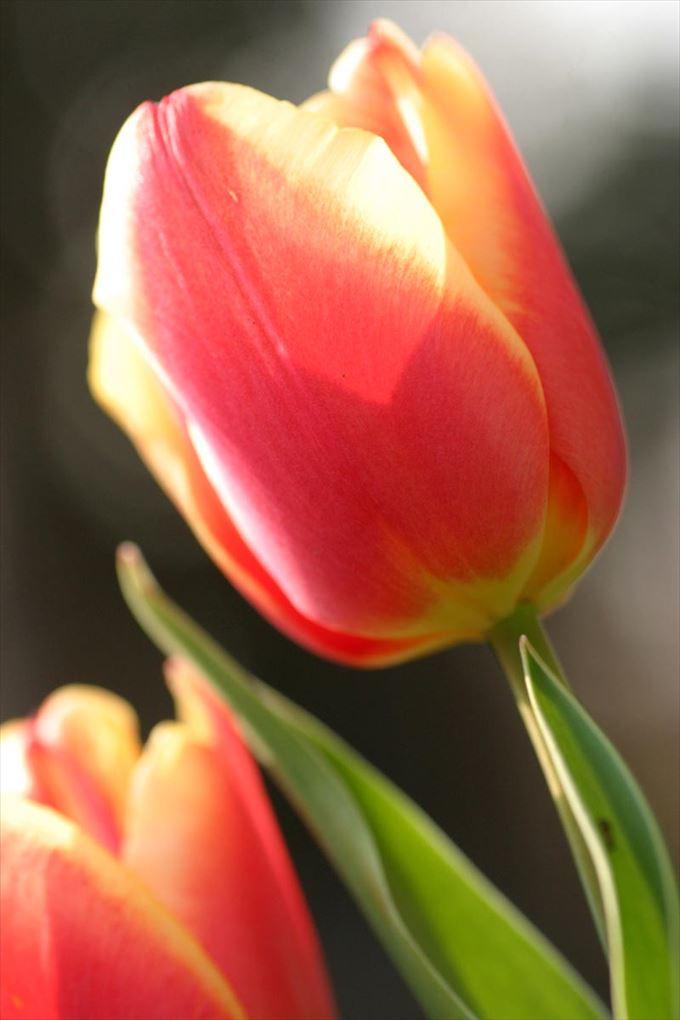 美しい花と花言葉 18